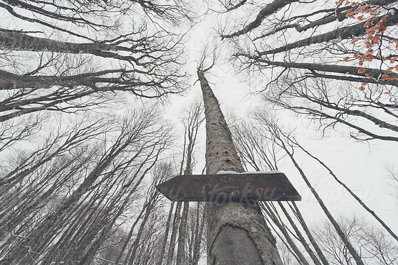 An arrow sign in forest by Dejan Ristovski for Stocksy United