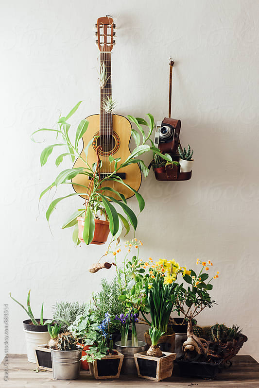 Plants on a guitar and an onld camera by Giada Canu for Stocksy United