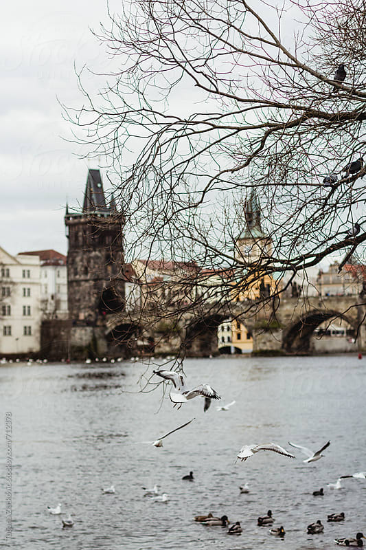 Prague by Tatjana Ristanic for Stocksy United