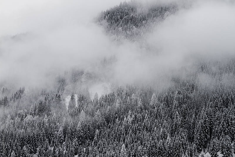 snowcovered forest in foggy winter landscape by Leander Nardin for Stocksy United