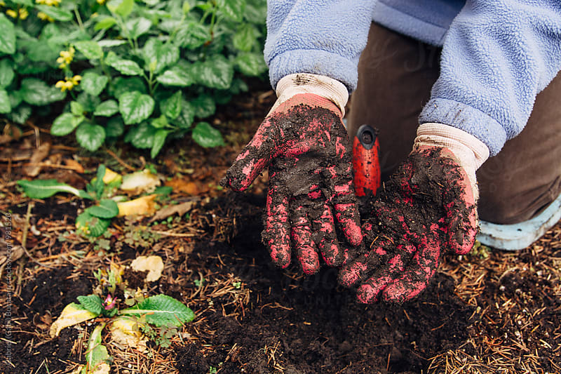 Muddy hands of a gardening woman with gloves by Gabriel (Gabi) Bucataru for Stocksy United