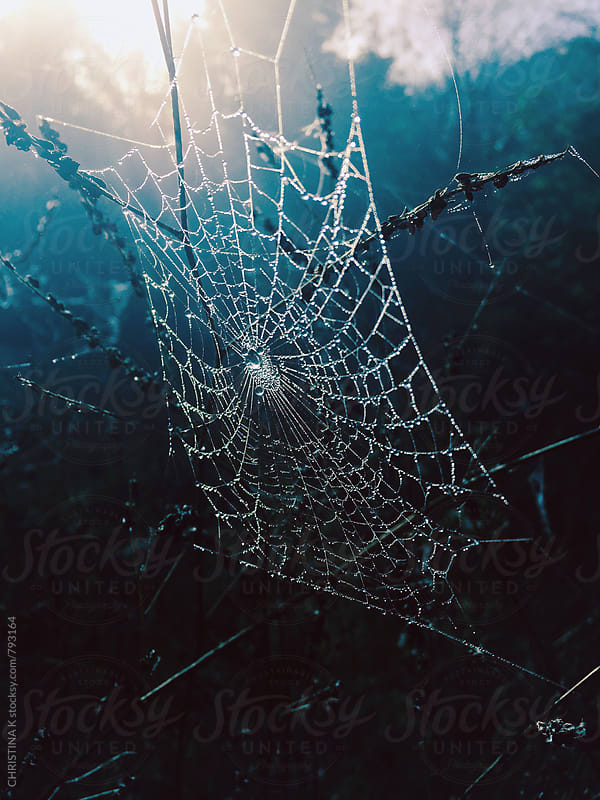 Intricate spiders web  by CHRISTINA K for Stocksy United