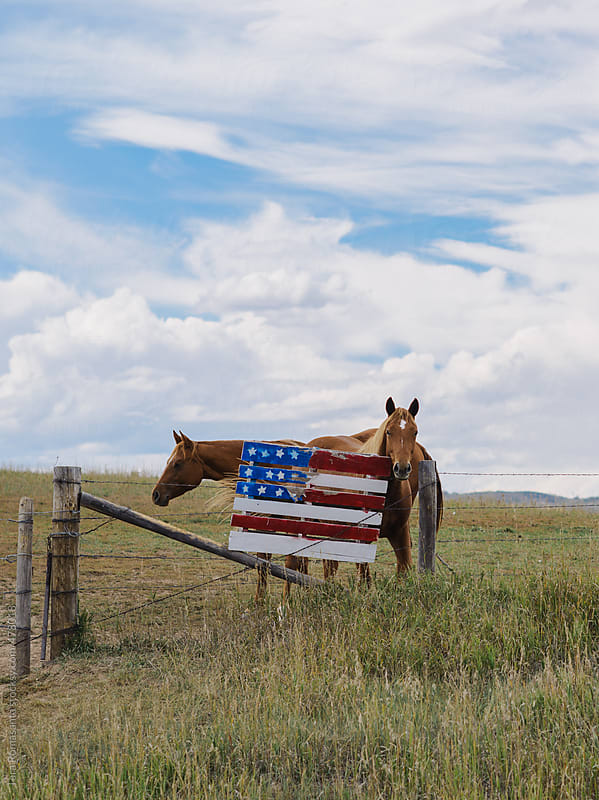 two horses stand near a hand crafted American flag by Tara Romasanta for Stocksy United