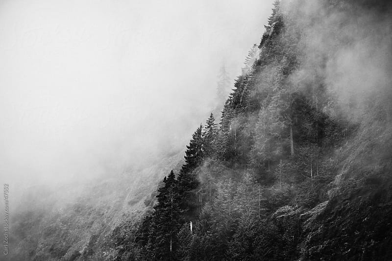 Foggy Morning by Carl Zoch for Stocksy United