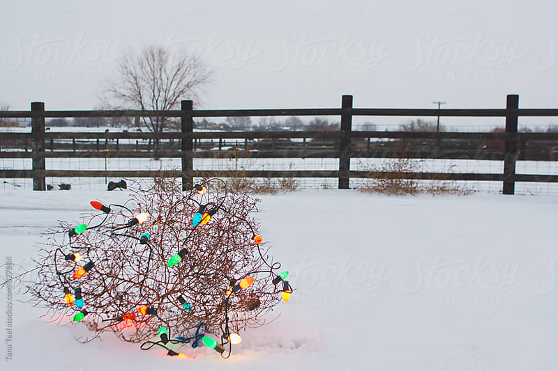 Tumbleweed decorated with large colored Christmas lights by Tana Teel for Stocksy United