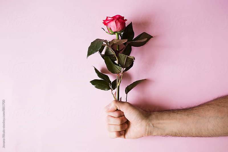 Male hand holding a rose by Jovana Rikalo for Stocksy United