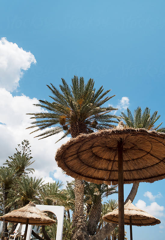 palm trees, sun umbrella and blue sky with copyspace by Sonja Lekovic for Stocksy United