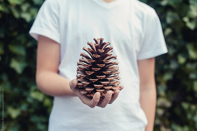 Closeup of the hand of a boy holding a big pinecone by Cindy Prins for Stocksy United