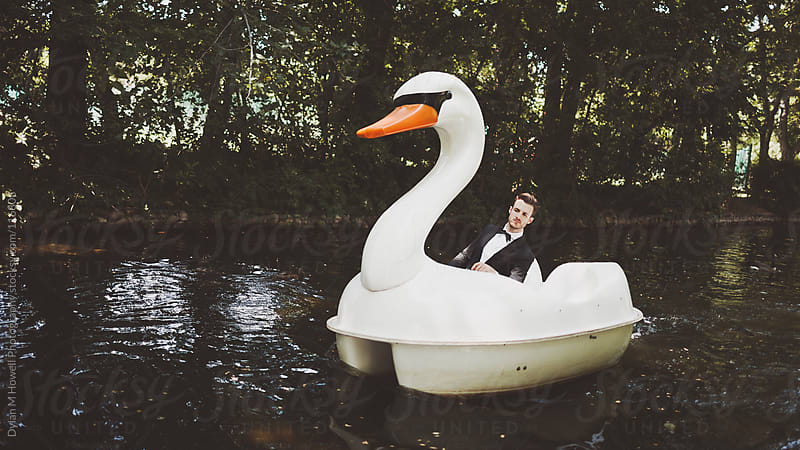 tuxedo swan by Dylan M Howell Photography for Stocksy United