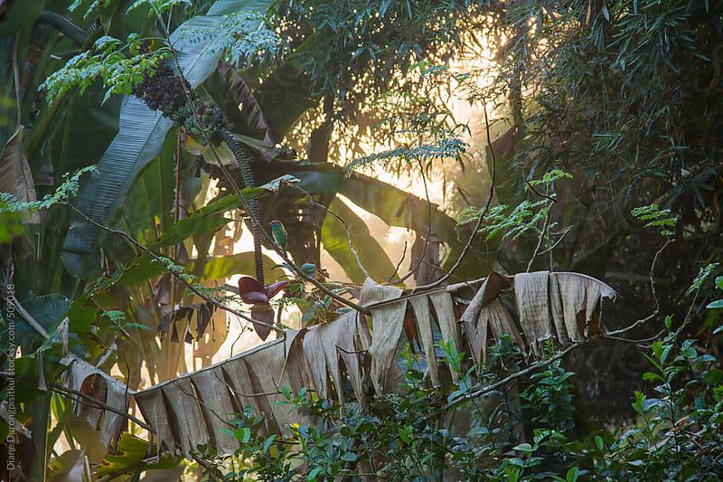 Jungle Sunrise by Diane Durongpisitkul for Stocksy United