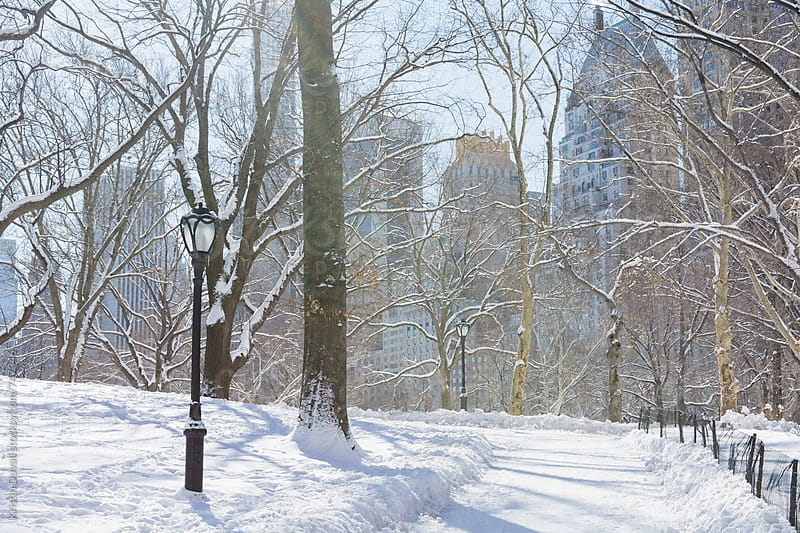 Snow covered Central Park landscape. New York City. by Kristin Duvall for Stocksy United