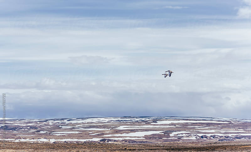 Geese flying over a wilderness landscape in Iceland by Søren Egeberg Photography for Stocksy United