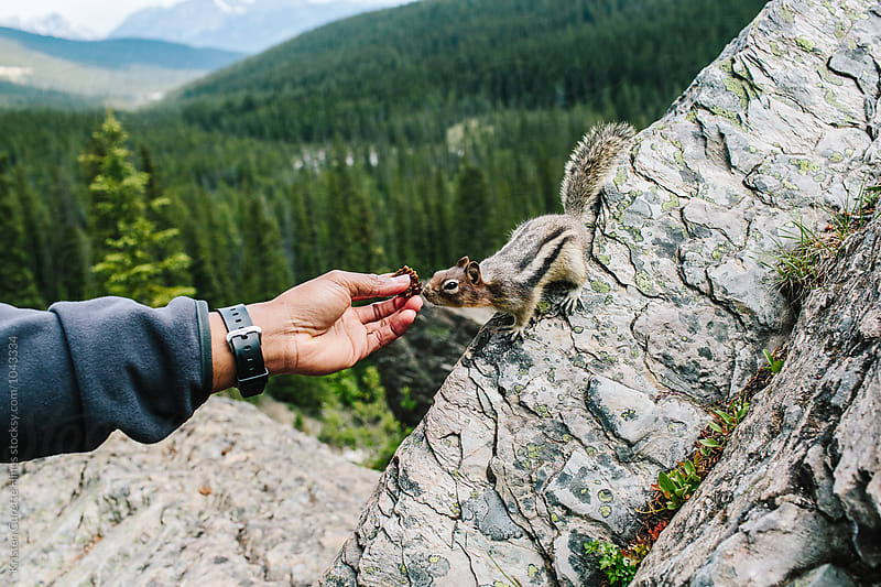 A handing reaching out to feed a chipmunk  by Kristen Curette Hines for Stocksy United