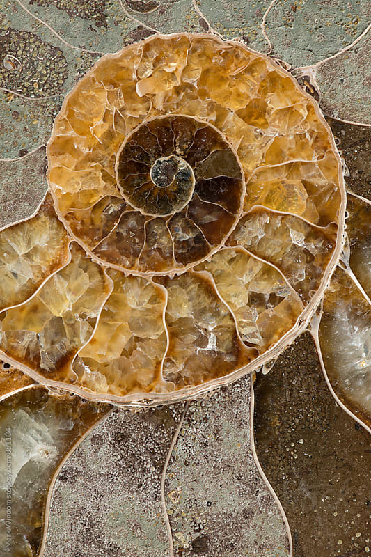 Ammonite fossil macrophotograph by Mark Windom for Stocksy United