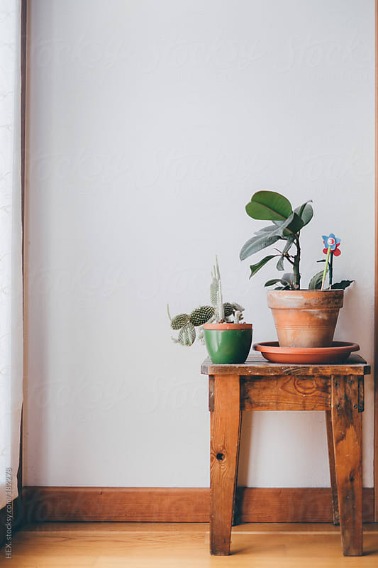 Vase With Green Plants Near Window by HEX. for Stocksy United