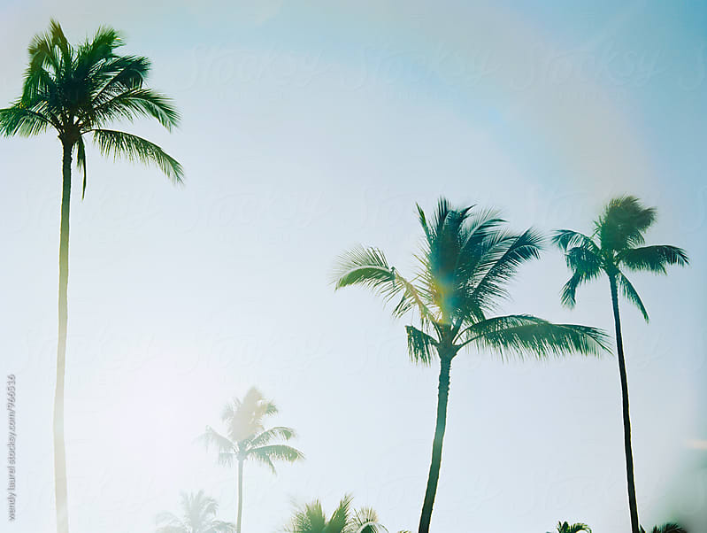 palm trees against blue sky with rainbow by wendy laurel for Stocksy United