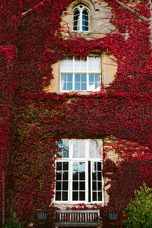 Autumn colour on the front of a building. by Helen Rushbrook for Stocksy United