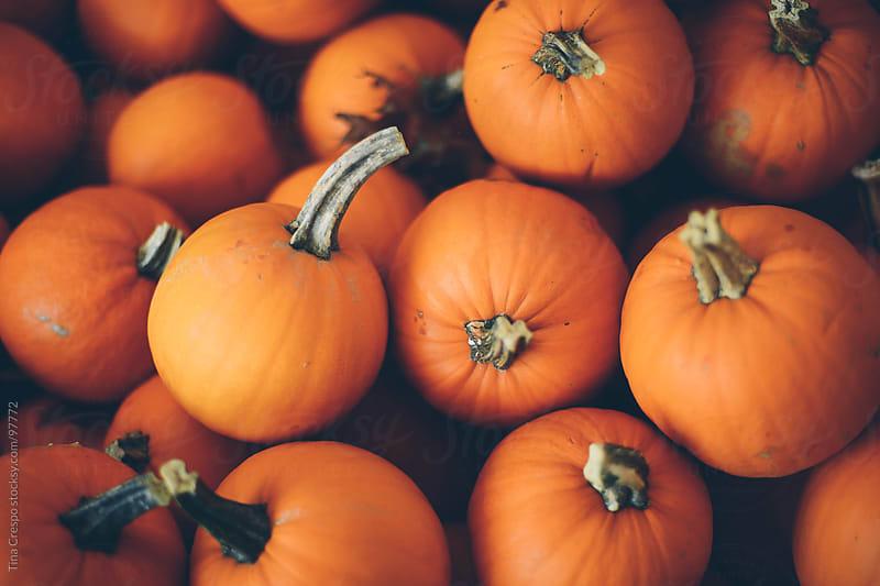Many pumpkins by Tina Crespo for Stocksy United