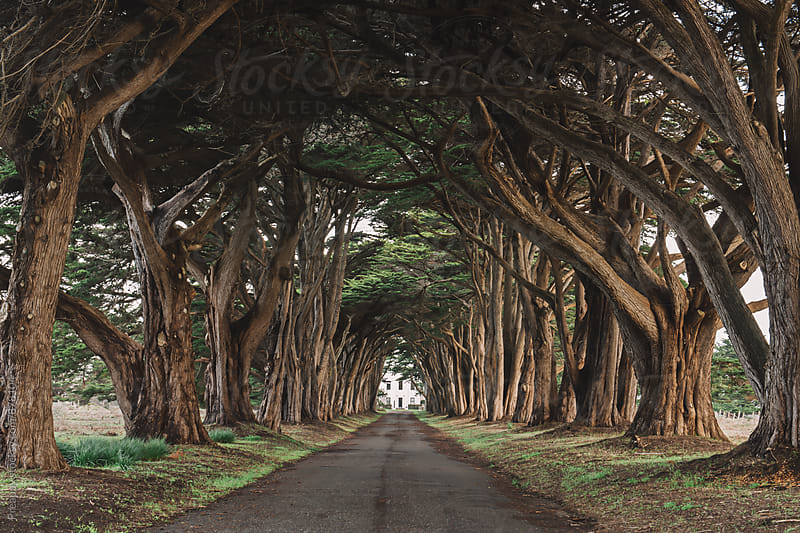 Cypress tree tunnel by Preappy for Stocksy United