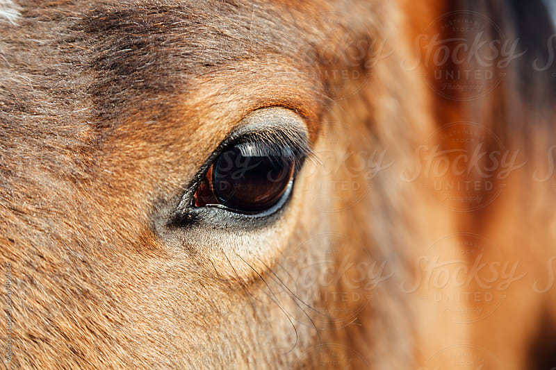 Equestrian Stare by Agencia for Stocksy United