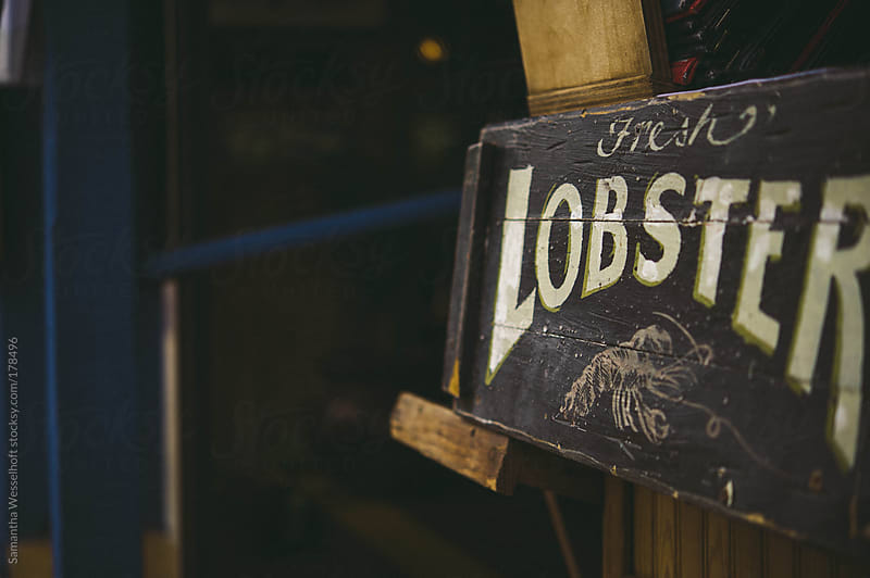 lobster by Samantha Wesselhoft for Stocksy United