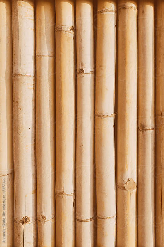 Bamboo Natural Background by Alexander Grabchilev for Stocksy United