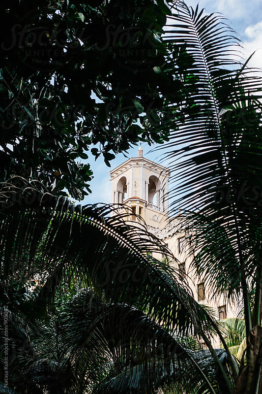 A look through the palm trees on Nacional hotel in Havana,Cuba by Natasa Kukic for Stocksy United
