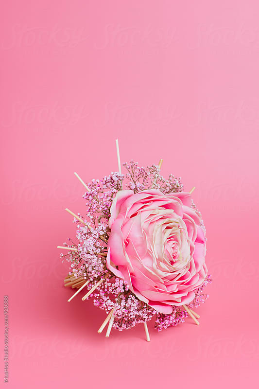 Beautiful pink rose by Maa Hoo for Stocksy United