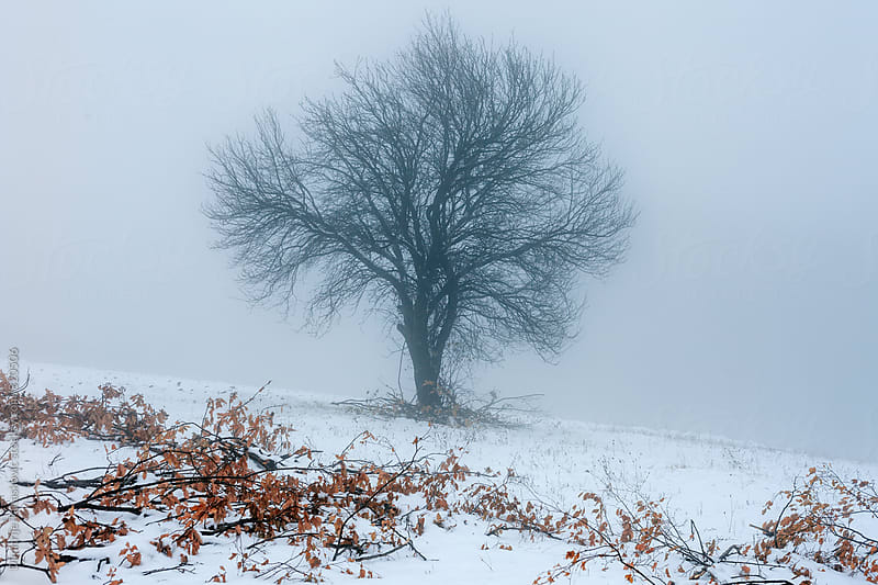 Lonely tree on the field covered with heavy fog by Dimitrije Tanaskovic for Stocksy United