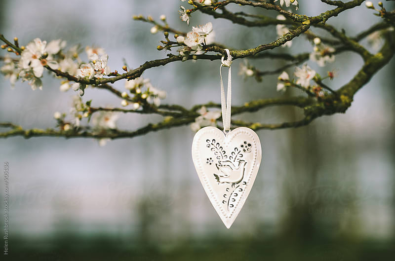 White metal heart with a dove motif hanging in a blossom tree by Helen Rushbrook for Stocksy United