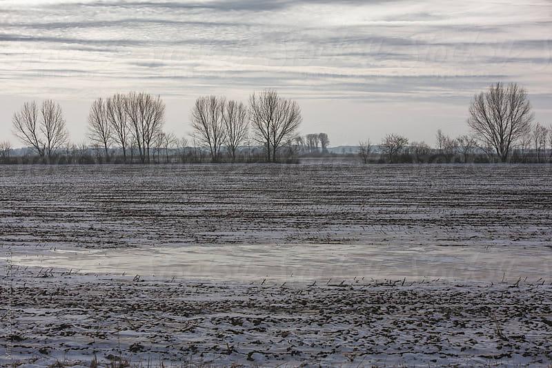 Frozen winter field in Brandenburg, Germany  by Mima Foto for Stocksy United