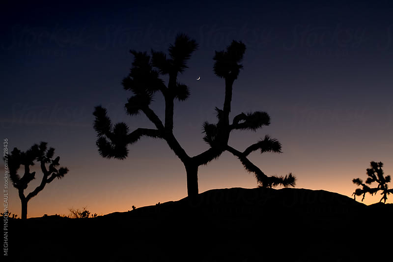 Dreamy Sunset with Silhouetted Joshua Trees  by MEGHAN PINSONNEAULT for Stocksy United