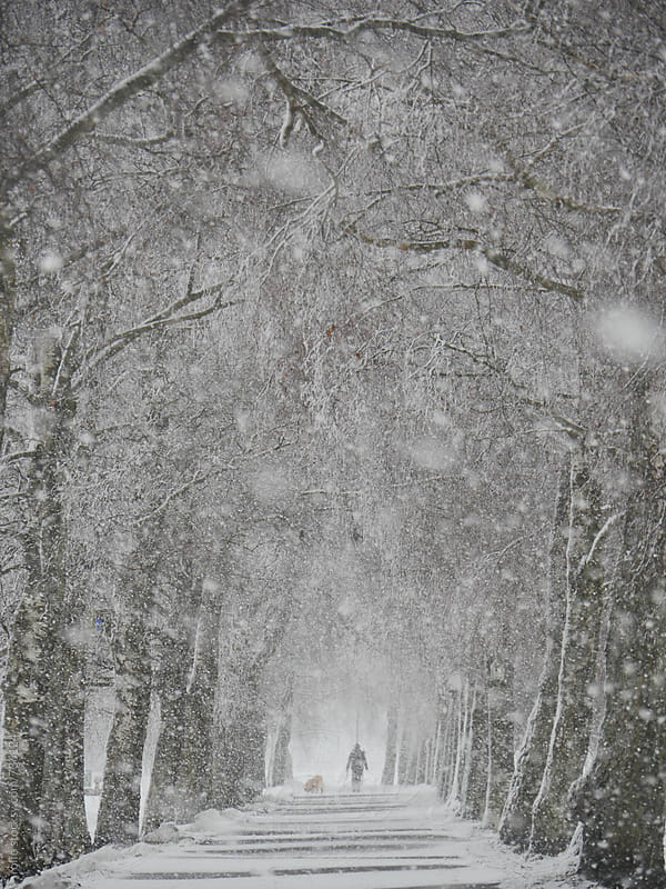 Man walking in a snowy park during a snowfall. by rolfo for Stocksy United