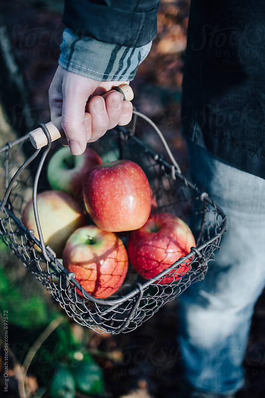 Apples in Basket by Hung Quach for Stocksy United