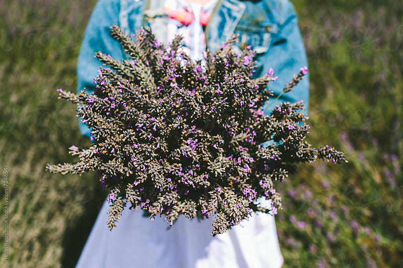 Girl holding a large bunch of cut lavender by Helen Rushbrook for Stocksy United