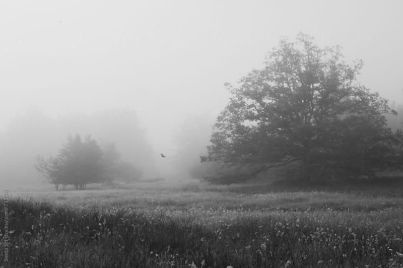 Old single oak tree in the middle of meadows. Black&White image. by Svetlana Shchemeleva for Stocksy United
