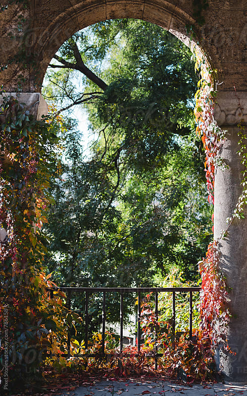 Stone arch covered in ivy in the autumn by Pixel Stories for Stocksy United
