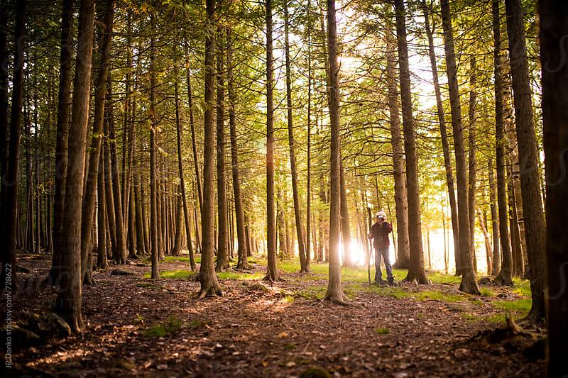 Little Boy Hiking In Cedar Forset At Sunset by JP Danko for Stocksy United