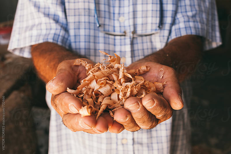 Close up of a Carpenter Hands Holding a Bunch of Wood Shavings by VICTOR TORRES for Stocksy United