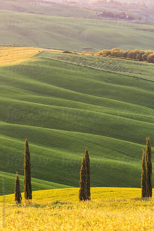 Tuscany landscape at sunset light by Marilar Irastorza for Stocksy United