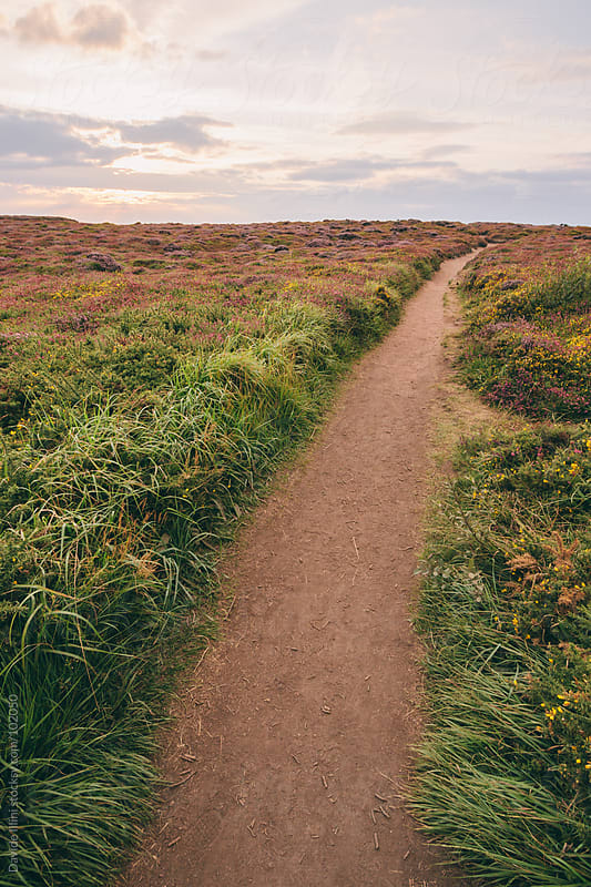 Dirt road on the coast of Brittany in France. by Davide Illini for Stocksy United