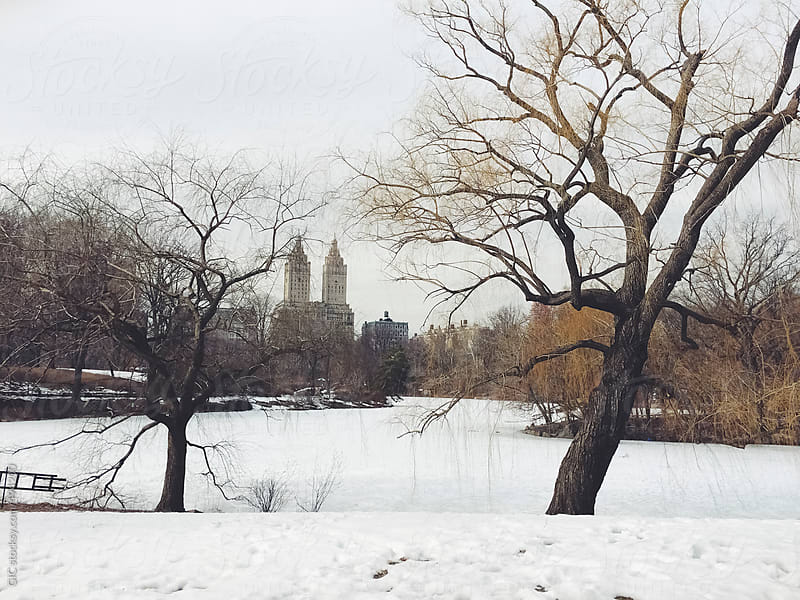 Central Park in New York City during winter by GIC for Stocksy United