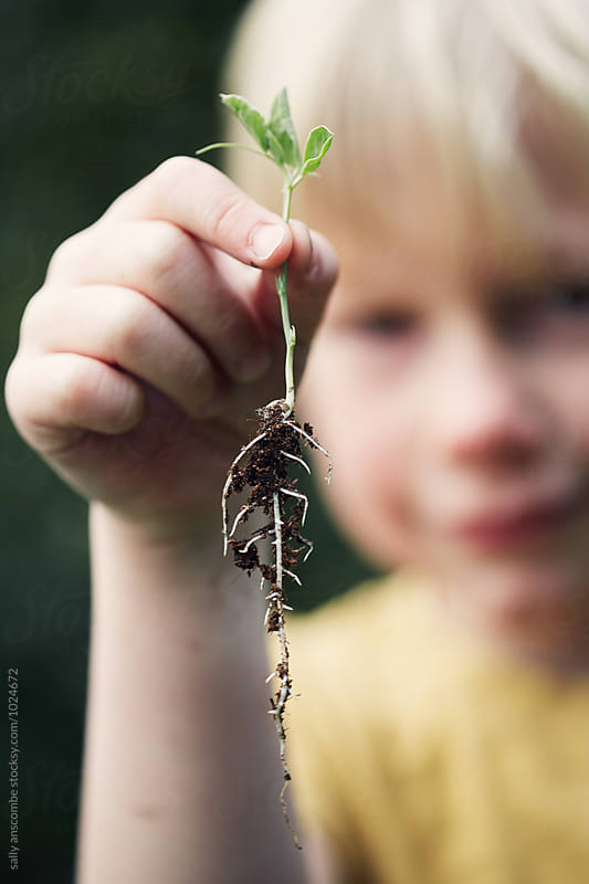 Child holding a seedling ready to plant by sally anscombe for Stocksy United
