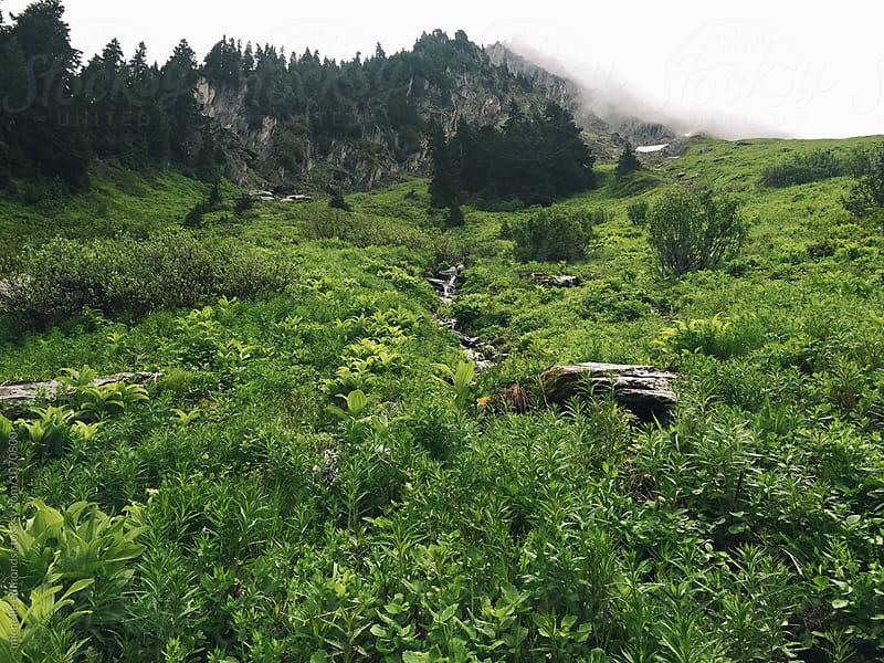 Alpine Meadow Hiking Trail in Washington by michelle edmonds for Stocksy United