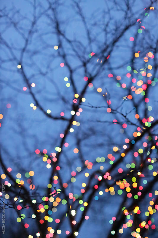 Christmas Lights On Bare Winter Tree  by ALICIA BOCK for Stocksy United