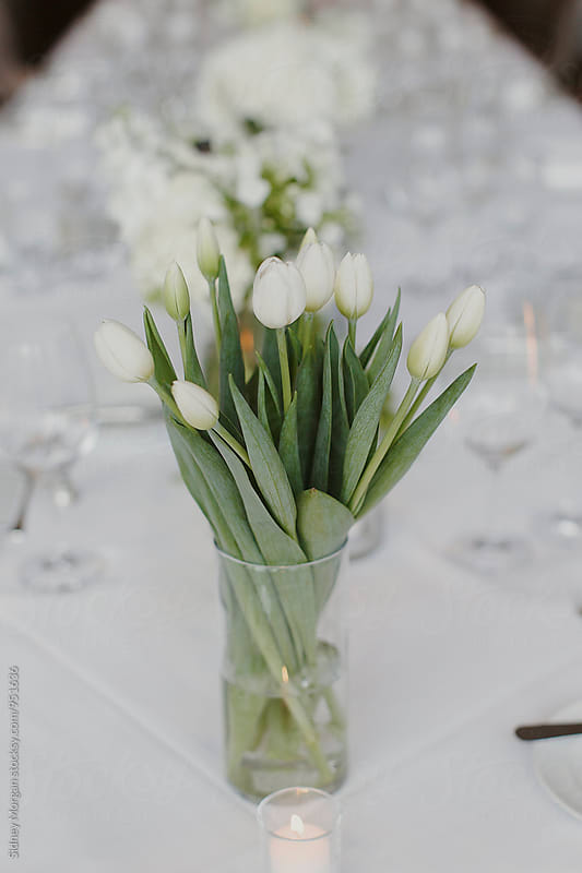 Tulips on Dinner Table by Sidney Morgan for Stocksy United