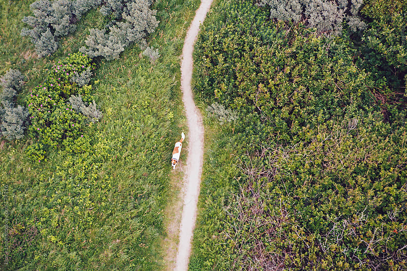 Dog walking on a trail by Lior + Lone for Stocksy United