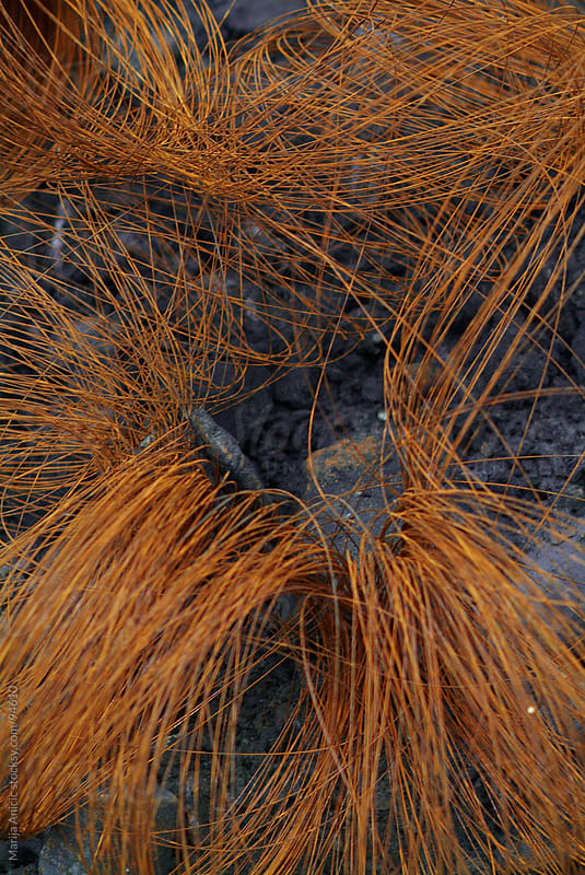 rusty metal wire by Marija Anicic for Stocksy United