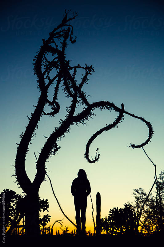 A girl standing underneath a twisting desert tree silhouetted as the sun goes down by Gary Parker for Stocksy United