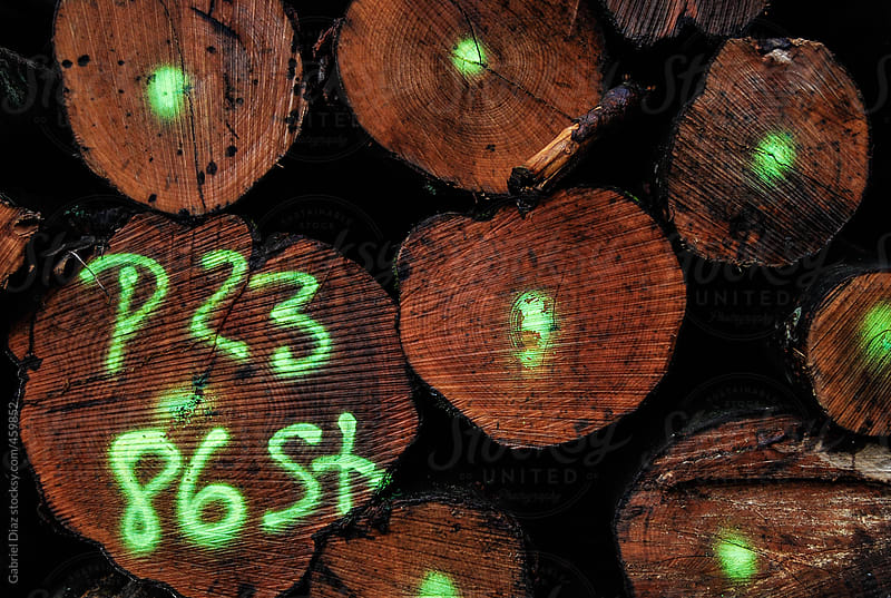 Pine Logs Background by Gabriel Diaz for Stocksy United